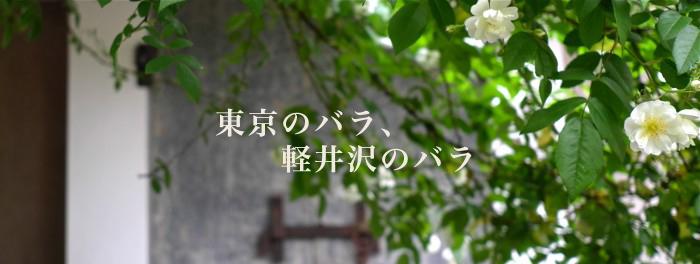 東京のバラ、軽井沢のバラ