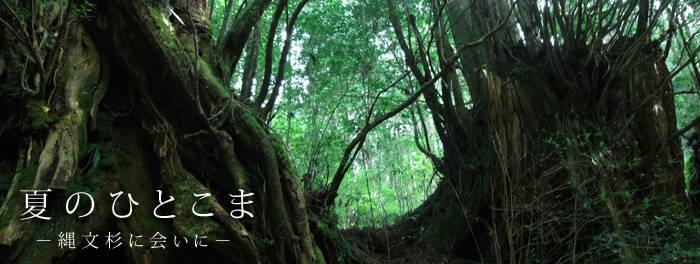 夏のひとこま-縄文杉に会いに-