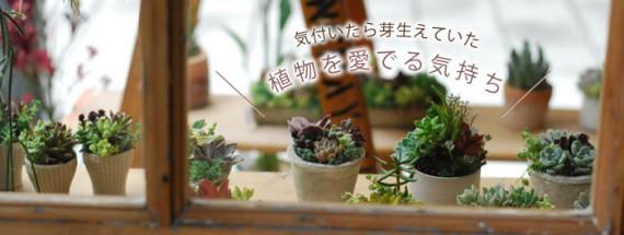 気付いたら芽生えていた、植物を愛でる気持ち